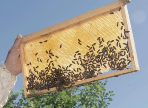 au-coeur-de-la-ruche