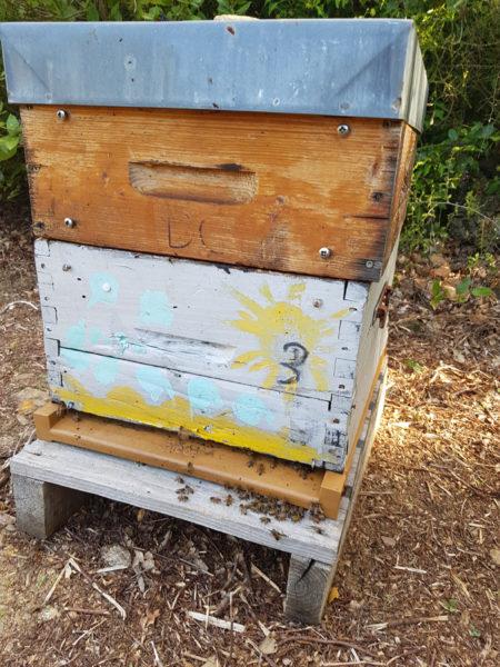 au-coeur-de-la-ruche-conservatoire-patrimoine-1marionlebrun
