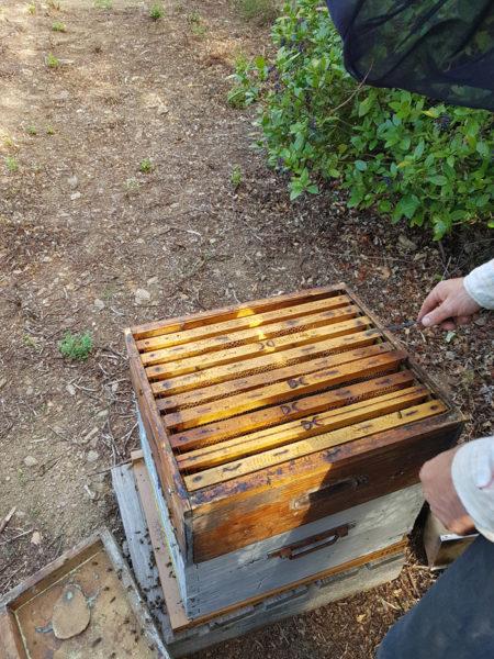 Au coeur de la ruche
