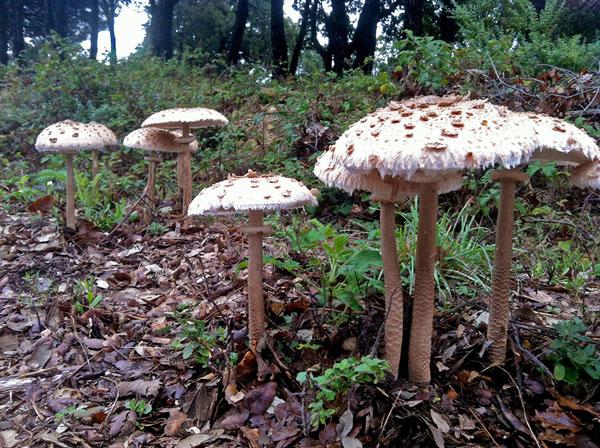 balade-champignon