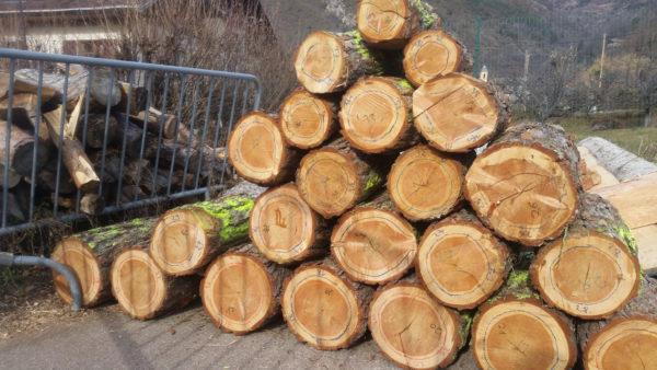 Les morceaux du tronc numérotés. La ligne bleue délimite les premiers 17 cernes de croissaince produites par l'arbre. @ D. VAN DE VELDE