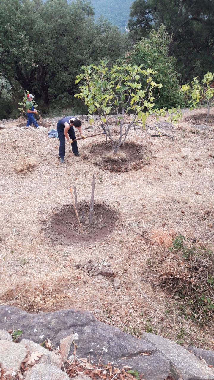 1021-5-formation-des-cuvettes-autour-des-arbres-le-premier-jourlboudinot
